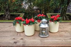 White flowerpots filled with red peppers and berries around a candleholder stock images