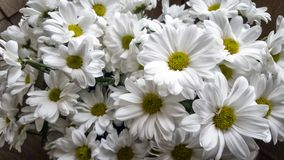 Free White Flowers. Stock Images - 110986734
