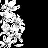 White flowers. Black and white background with white flowers Stock Photo
