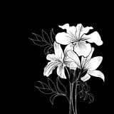White flowers. Black and white background with white flowers Royalty Free Stock Photography