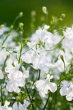 White flowers. On green nature background Stock Photo