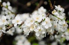 white flowers Stock Photo