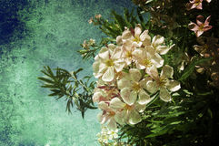 White flowers. MAny white flowers in an old image Royalty Free Stock Images