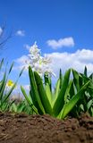 White flowers. Some decorative flowers against the sky Royalty Free Stock Photo