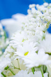 White flowers Stock Image
