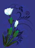 White flowers. White flower on blue background Floral designs Royalty Free Stock Photo