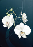 The white flowers. The decorative white flowers for design and illustration vector illustration
