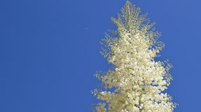 White flowers against blue sky background Stock Photo