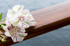 White flowers of Alstroemeria. White Alstroemeria flower on wooden railing. Ocean background. Copy space stock photos