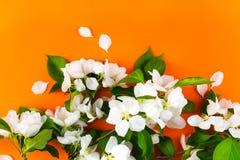 White flowers apple tree branch on orange background. Beautiful greenery spring border wallpaper template