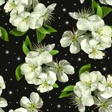 White flowers of apple. royalty free stock photo