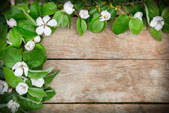 White flowers arrangement on a rustic wooden table Royalty Free Stock Image