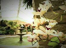 White Flowers in an atrium with fountain. White flowers in the foreground and a water fountain in the background.  All within an atrium Stock Photography