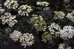 White Flowers Background in the forest royalty free stock images