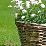 White flowers in basket Royalty Free Stock Photos