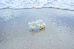 White flowers on the beach Royalty Free Stock Photos