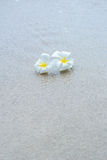 White flowers on the beach Royalty Free Stock Photo