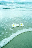 White flowers on the beach Royalty Free Stock Images