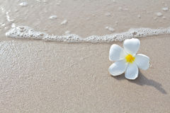 White flowers on the beach Royalty Free Stock Photography
