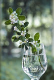 White flowers on beautiful background. A small branch of white flowers in a glass of water Royalty Free Stock Image