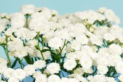 White flowers Stock Images