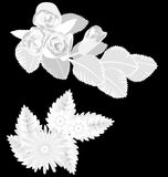 White flowers  on black Stock Photo