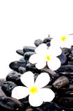 White flowers on black zen stones Stock Images