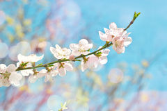 White flowers in bloom Royalty Free Stock Photos