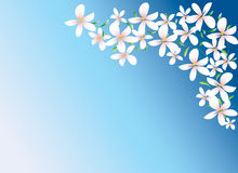 White flowers on blue background. White flowers vector on blue background Royalty Free Stock Images