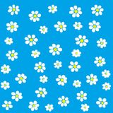 White Flowers on Blue Background Stock Photos