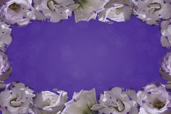 Frame of white flowers on a blue background. stock image