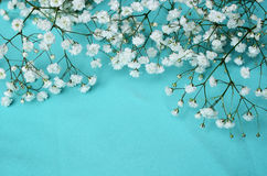 White flowers on blue background Royalty Free Stock Image