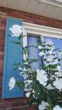 Window garden stock photography