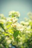 White flowers on blue sky Stock Image
