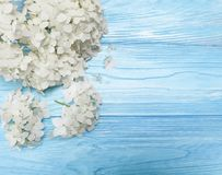 White flowers on blue wooden background beauty. Frame Royalty Free Stock Photos
