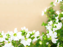 White Flowers Border Stock Photo
