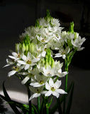 White flowers bouquet. Against dark background stock image