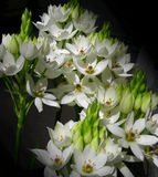 White flowers bouquet. Against dark background stock photo