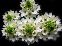 White flowers bouquet Stock Photos