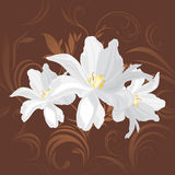 White flowers on the brown ornamental background Stock Image