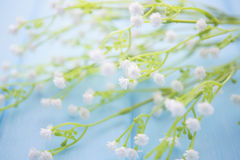 White flowers and buds on wood background Royalty Free Stock Photography