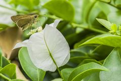 White flowers with butterflies Royalty Free Stock Photo
