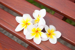 White flowers on a chair. Royalty Free Stock Image