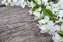 White flowers of cherry on old, wooden boards, a branch of blossoming cherry. View from above stock photos