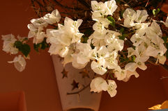 White flowers. In clay pot on the wall Stock Photo