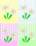 White flowers with colorful backgrounds Royalty Free Stock Image