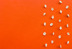 White flowers  with copy-space on orange background Royalty Free Stock Images