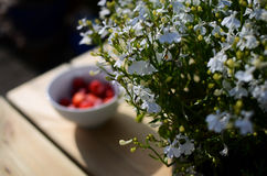 White flowers on country table. White flowers with strawberry's in background on country table royalty free stock photo