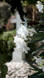 White Flowers and Cross Royalty Free Stock Photos