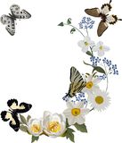 White flowers curl with butterflies Stock Photography